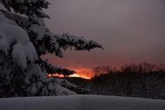 winter - winter, sunset, night, trees, snow, sky
