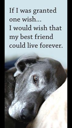 Pinterest | Dog, Pet loss ...