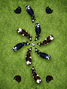 Soccer Cows