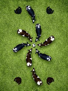 Soccer Cows