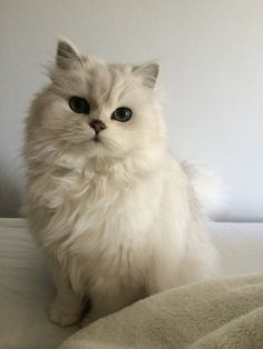 it's a cadie-thing - - it's a cadie-thing Katzen it's a cadie-thing — animalsdancing: Tiny legs Cute Cats And Kittens, Baby Cats, I Love Cats, Kittens Cutest, Pretty Cats, Beautiful Cats, Animals And Pets, Funny Animals, Sweet Dogs