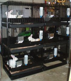 rabbit cage setup