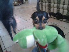 Rocco ;) ... Vito's bf !!