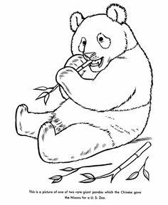 rare giant panda coloring pagejpg 600734