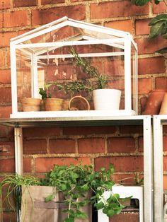 Det lilla växthuset SOCKER är perfekt för sommarens balkongodling. Här på hyllan HYLLIS.