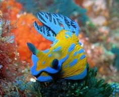 Cool underwater colours