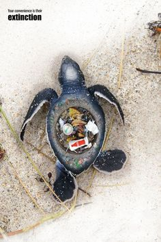 6 jarring photos reveal the reality of water pollution (warning: images may be upsetting to some)