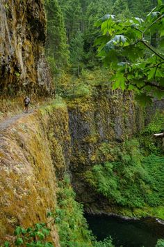 the Eagle Creek Trail, (alternate route Vs/ actual PCT) section that leads into 'Tunnel Falls'.