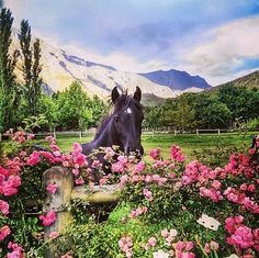 Equine still life in Greyton - Overberg - Western Cape, South Africa. Tomorrow Is Another Day, Move Mountains, My Land, Nature Reserve, My Happy Place, Beautiful Horses, Cape Town, Still Life, Wines