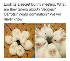 Secret bunny meeting in progress