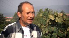 El vino picapoll. El vino picapoll o vi picapoll, es uno de los vídeos realizados para El Rebost del Bages, comarca catalana, que dedica este espacio para dar a conocer la importancia de sus productos y productores