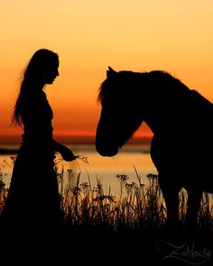 silhouetted horse