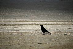 Vogel op het strand