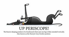 Up periscope! by Richard Skipworth (I have seen this pose thousands of times and never thought of this....)