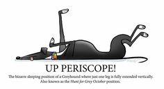 Up periscope! by Richard Skipworth