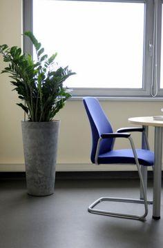 officeplant.pl rośliny do biura zamioculcas