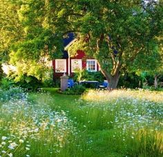 "to the classic perfect lawn"" Typical Scandinavian Summer Cottage GardenTypical Scandinavian Summer Cottage Garden Swedish Cottage, Red Cottage, Swedish House, Garden Cottage, Home And Garden, Summer Garden, Winter Garden, Meadow Garden, Dream Garden"