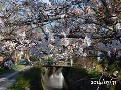 京都 哲学の道 桜 2014/03/31