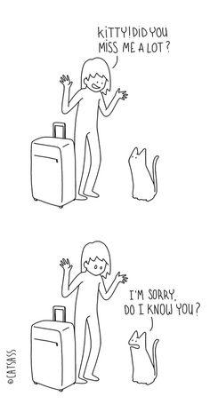 Что ваш кот думает на самом деле? Задумывались ли вы, что ваш котенок мог бы вам сказать? Catsass раскроет некоторые секреты. Не обманывайте себя: он мило выглядит, но его кошачьи глубокие мысли не так очаровательны, как его внешний вид)).   Найдено: https://instagram.com/catsasss/