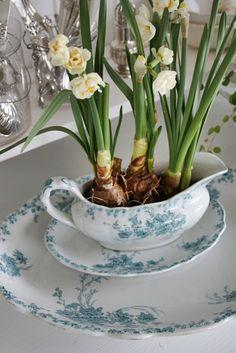 Bulbs in blue & white china