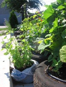 Posts tagged 'gardening in bags'