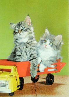 Beaux petits chatons sur un camion jouet. Animals, Vintage, Grey, Little Kitty, Wild Animals, Toy, Dog, Cards, Kittens