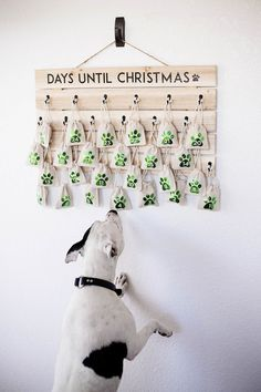 Holiday shaped treats for each day leading up to Christ DIY dog advent calendar! Holiday shaped treats for each day leading up to Christmas. Christmas Dog, Christmas Crafts, Christmas Decorations, Holiday Decor, Dog Decorations, Christmas Tables, Nordic Christmas, Christmas Kitchen, Modern Christmas