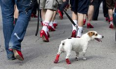 Walk a Mile in Her Shoes, Men'a March to Stop Rape, Sexual Assault & Gender Violence