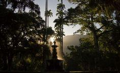 Raios de Sol no Jardim Botânico - RJ