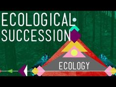 Great youtube channel - 10 minute videos on a variety of educational subjects (history, science, ecology...). Very funny.