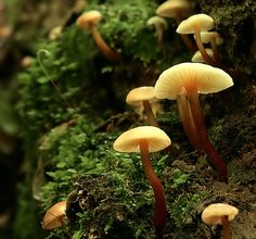Toadstools    Cindi Hinshaw via Sandee Tucker onto #65) Outdoors..Enchanted Forrest...Remember Once Upon A Time, when we were kids?..We could play for hours, just pretending....