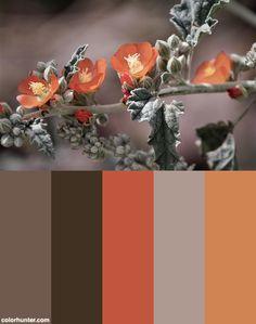 Soft Autumn Color Palette, Colour Pallette, Color Schemes, Autumn Colours, Colour Combinations, Colorful Flowers, Flower Colors, Mallow Flower, House Colors