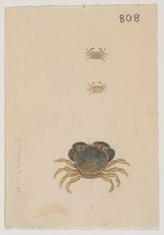 Crabs (10 April 1851; 3 specimens) by The Ernst Mayr Library on Flickr.