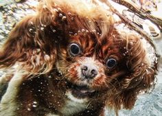 OMG! This water makes my face funny!