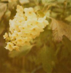 Polaroid 600 Film