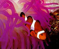 Awesome Marine Life « Crazy Pics