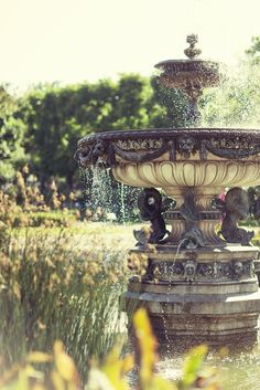 Vienna Rose Garden