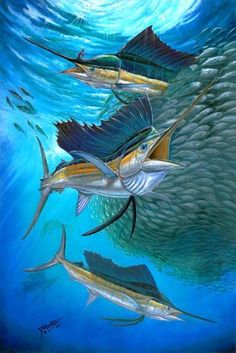 Sailfish With A Ball Of Bait