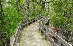 Boardwalk trail in Ludington State Park at Ludington, Michigan