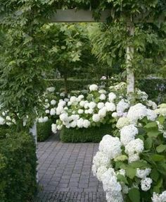 Verandah House: Hydrangea Love