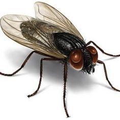 Como Acabar Con Las Moscas De Casa Coloque Esto En Su Casa 1 Hora Despues No Vera Mas Mosquitos