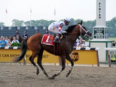 PHOTO: Big Brown, with jockey Kent Desormeaux, pulls up as he finishes last in the 2008 Belmont Stakes, June at Belmont Park in Elm. Kentucky, Smarty Jones, Derby, Big Brown, Racehorse, Horse Racing, June, Horses, Park