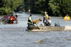 The AKC Reunite Team is helping lead efforts for pet disaster in Florida, North Carolina and South Carolina.