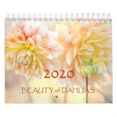 Shop Beauty of Dahlias Flowers 2020 Calendar created by JennyRainbow. Dahlia Flower, Flowers, Holiday Gifts, Christmas Gifts, Event Template, Wire Binding, Bloom Blossom, Calendar 2020, Buy Art Online