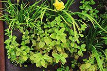 ttuin ideeen, verticaal tuinieren, Kruidentuin, Moestuin, Bloementuin, Verticaal tuinieren zakken, Verticaal tuinieren binnen, Verticaal tuinieren
