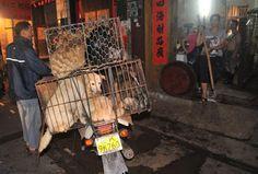 SandRamirez contra el maltrato animal. • www.luchandoporellos.es: UNA MUJER GASTA 1.000 EUROS PARA SALVAR A 100 PERR...