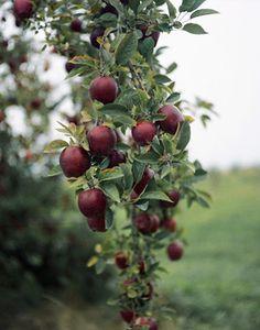 """I want apple trees""""!! :)"""