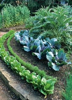 love the layout of the veggies in this kitchen potager ..
