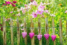 Clematis, Fence, Garden Design, Plants, Inspiration, Beautiful, Allotment, Gardening, Google