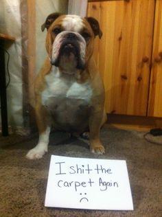 I pooped on the carpet again